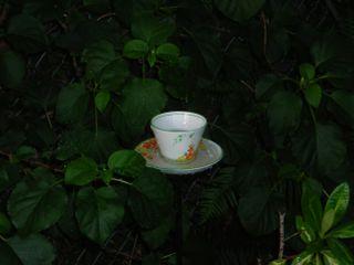 TeacupRain