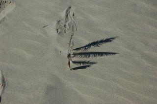 SandFeather