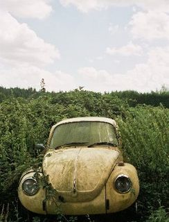 VW_In_a_hedgerow_small
